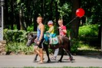 День рождения Белоусовского парка, Фото: 75