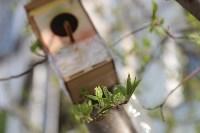 Краски весны в Туле, Фото: 12
