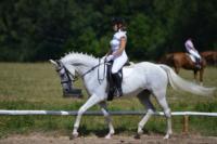 В Ясной поляне стартовал турнир по конному спорту, Фото: 29
