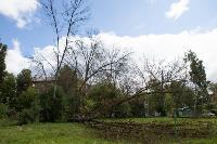 Мне нужнее: в тульском дворе подрядчик самовольно вырубил 15 ясеней и забрал их себе, Фото: 14