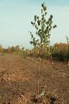 Высадка деревьев на территории бывшей судаковской свалки, Фото: 7