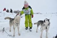 Праздник северных собак на Куликовом поле , Фото: 26