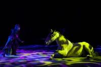 Туляков приглашают на новогоднее представление «Ёлка в цирке», Фото: 81