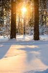 Снежное Поленово, Фото: 42