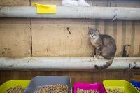 Волонтеры спасли кошек из адской квартиры, Фото: 30