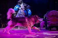 Шоу фонтанов «13 месяцев»: успей увидеть уникальную программу в Тульском цирке, Фото: 141