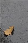 Осень, Фото: 18