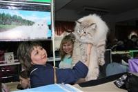 В Туле прошла международная выставка кошек, Фото: 61