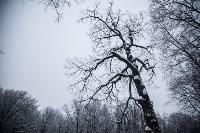 Темная сторона Платоновского парка, Фото: 14