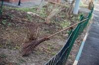 Посадка деревьев во дворе на ул. Максимовского, 23, Фото: 30
