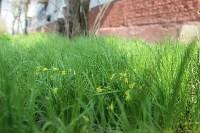 Краски весны в Туле, Фото: 18