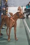 Выставка собак в Туле 26.01, Фото: 74