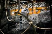 Тульский экзотариум: животные, Фото: 17