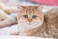 Выставка кошек в МАКСИ, Фото: 18