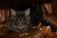 Выставка кошек. 21.12.2014, Фото: 16