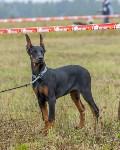 Международная выставка собак, Барсучок. 5.09.2015, Фото: 45