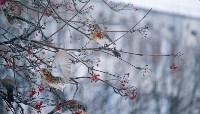 Дрозды-рябинники в Туле, Фото: 32