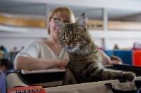 Выставка кошек в ГКЗ. 26 марта 2016 года, Фото: 70
