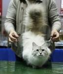Выставка кошек, Фото: 16