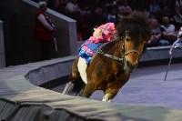 Цирковое шоу, Фото: 61