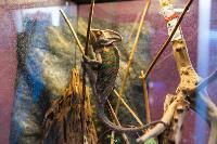 Животные: груминг и ветклиники, Фото: 5