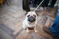 Выставка собак в Туле, 29.11.2015, Фото: 62