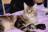 Выставка кошек в Искре, Фото: 19