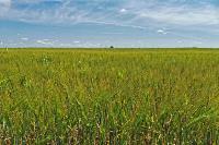В Тульской области началась расчистка русел Оки и Упы, Фото: 20