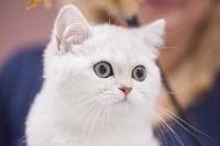 Выставка кошек в МАКСИ, Фото: 86