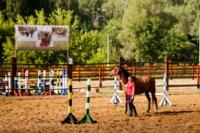 Новые лошади для конной полиции в Центральном парке, Фото: 3