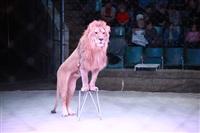 Новая программа в Тульском цирке «Нильские львы». 12 марта 2014, Фото: 13