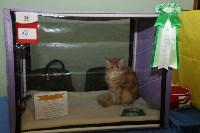 Выставка кошек. 21.12.2014, Фото: 28
