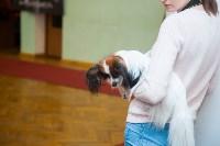 Всероссийская выставка собак 2017, Фото: 50