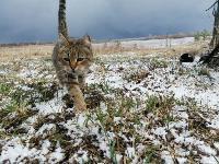 Тульские котики, Фото: 81