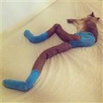Коты в колготках, Фото: 8