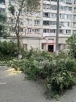 Читатель о вырубке деревьев на ул. Революции: «Была красивая зеленая улица, а теперь…», Фото: 1