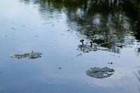 Летний день в Ясной Поляне, Фото: 45