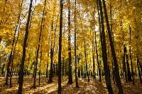 Золотая осень в Туле-2019, Фото: 68