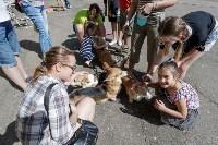 Фестиваль помощи животным в Центральном парке, Фото: 13
