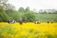 Коровы, свиньи и горы навоза в деревне Кукуй: Роспотреб требует запрета деятельности токсичной фермы, Фото: 8