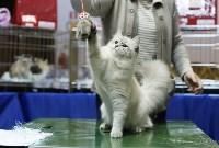 Выставка кошек, Фото: 13