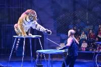 Цирковое шоу, Фото: 114