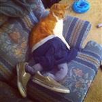 Коты в колготках-2, Фото: 1