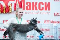"""Выставка """"Пряничные кошки"""" в ТРЦ """"Макси"""", Фото: 39"""