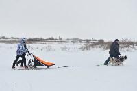 Праздник северных собак на Куликовом поле , Фото: 69