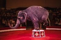 «Шоу Слонов» в Тульском цирке, Фото: 22