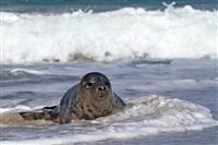 Жизнь тюленя: мечта!, Фото: 12