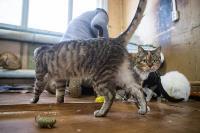 Волонтеры спасли кошек из адской квартиры, Фото: 36