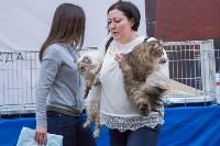 Выставка кошек в Туле, Фото: 42