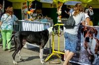 В Центральном парке Тулы проходит фестиваль помощи животным, Фото: 3